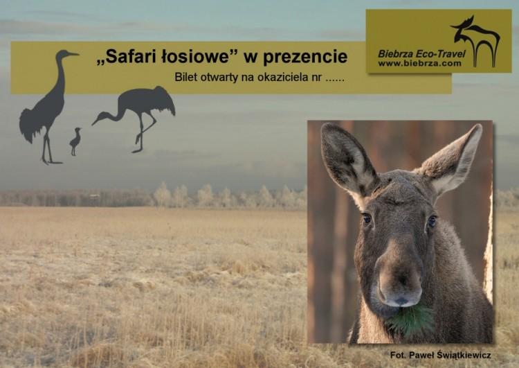 Safari 1 -300dpi