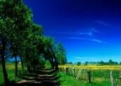 *Wśród kwitnących łąk